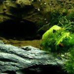 Paramètres de l'aquarium planté