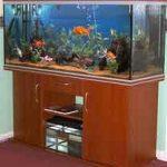 Bien placer son aquarium