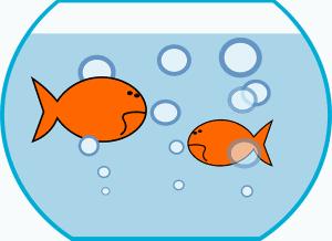 choisir un aquarium: éviter le bocal à poissons rouges!