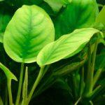 Plantes et poissons rouges