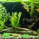 Aquarium planté spacieux
